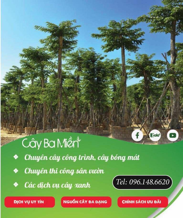 ảnh banner danh mục cây xanh