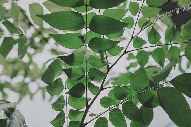 Lá cây