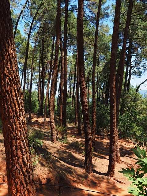 rừng thông phủ xanh đồi trọc