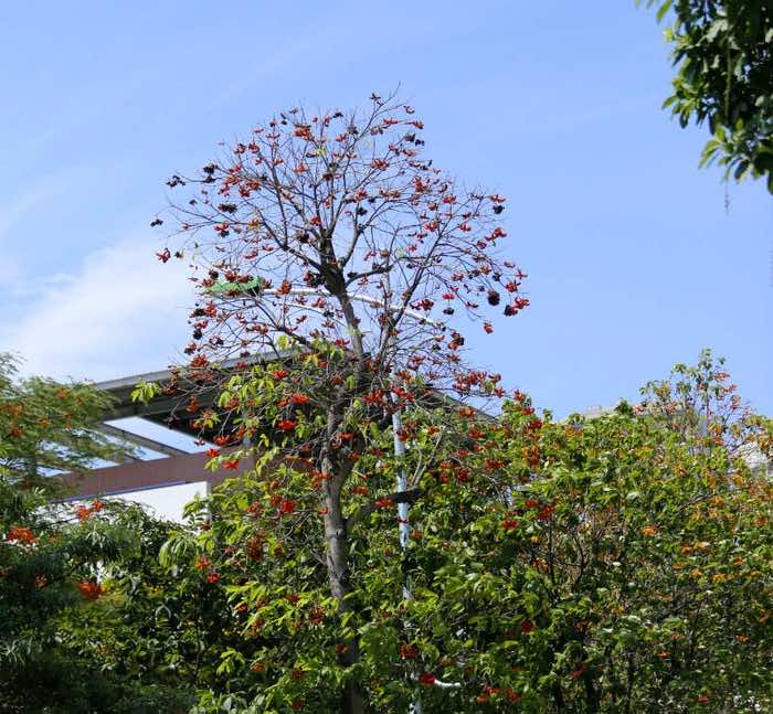 Hình ảnh cây sang đẹp