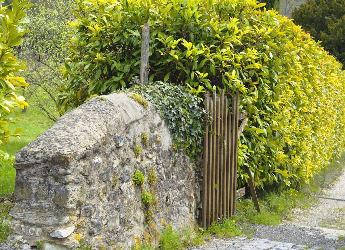 Hàng rào chuỗi ngọc