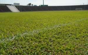 Sân vận động trồng bằng cỏ lá gừng