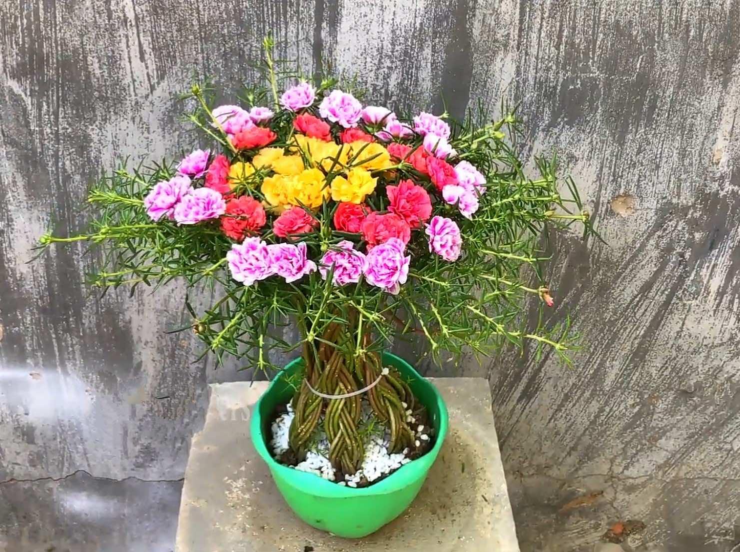 Một số mẫu hoa mười giờ đẹp