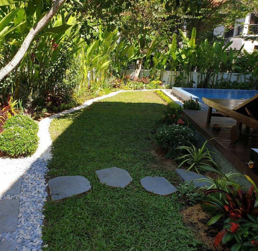 Thảm cỏ lá gừng trong vườn nhà