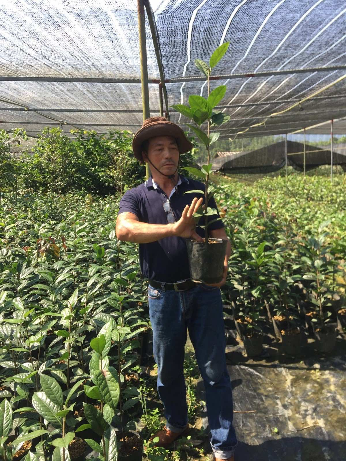 Trồng cây hoa trà