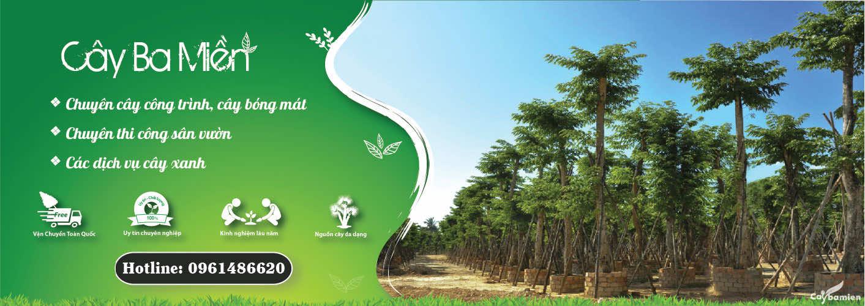 Banner danh mục cây xanh cây công trình