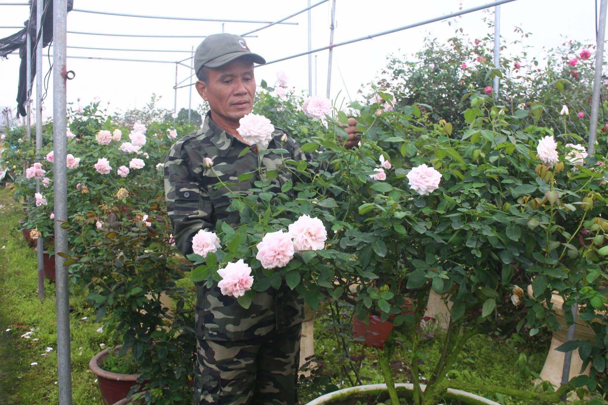 Chăm sóc vườn hồng