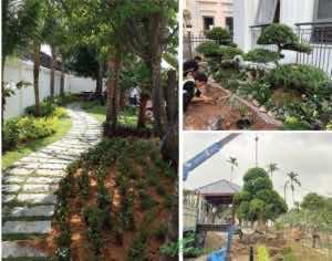 dịch vụ trồng cây xanh toàn quốc