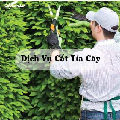 ảnh minh họa dịch vụ cắt tỉa cây xanh