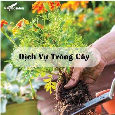 Minh họa dịch vụ trồng cây