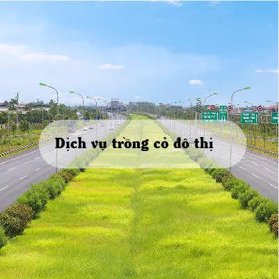 dịch vụ trồng cỏ cho đô thị