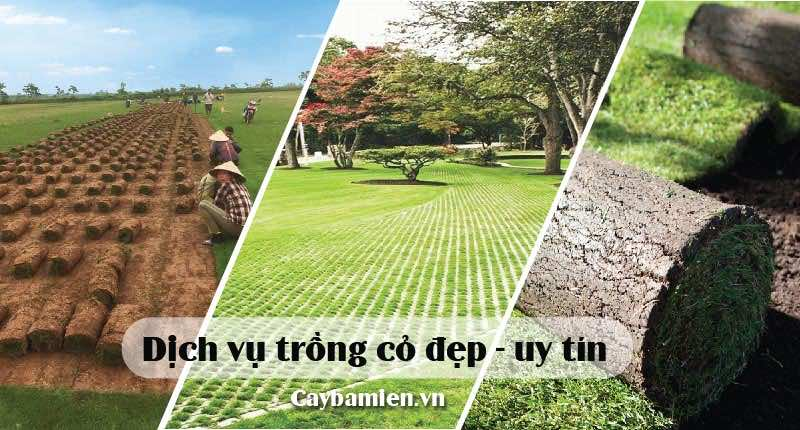 dịch vụ trồng cỏ đep