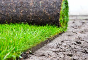 Thảm cỏ nhung nhật