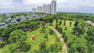 cây xanh cho cảnh quan đô thị đẹp