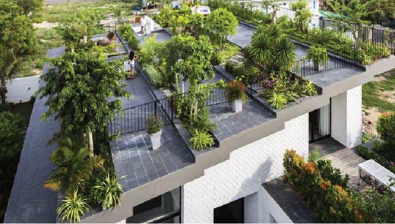 cây xanh trồng trên sân thượng