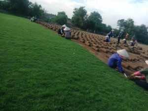 cỏ được xé thành từng miếng và cuộn tròn