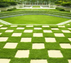 cỏ trồng thành từng thảm đẹp