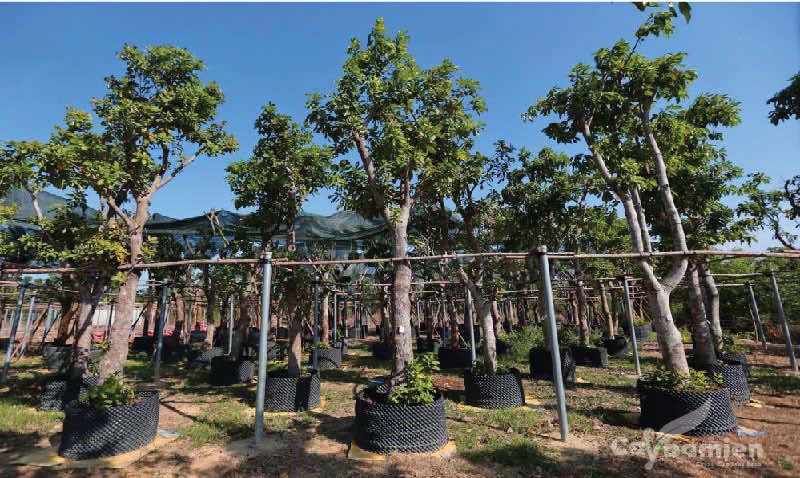 vườn cây công trình dâm ủ